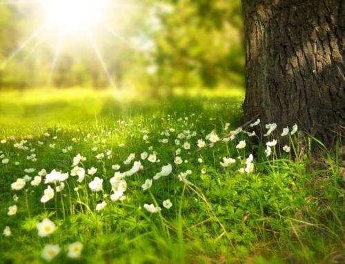 Évènement vedette du printemps!